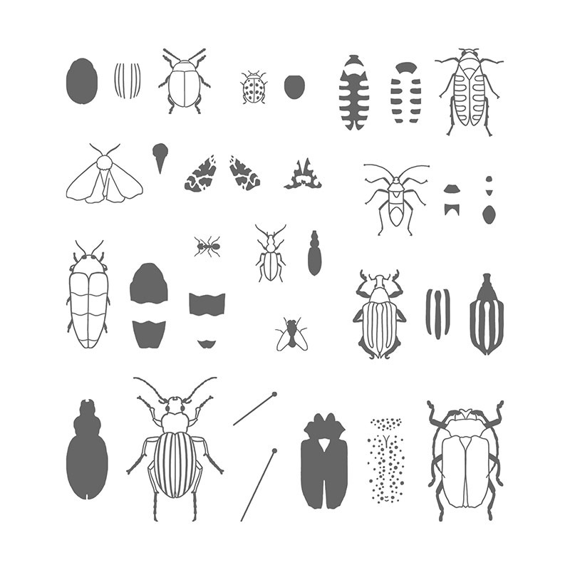 Beetles Bugs Photopolymer Stamp Set From Stampin Up Available Alphacrafts